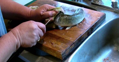 Headless, Gutted Fish Suddenly Comes Back To Life